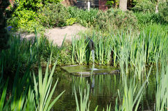Pond. Beautiful garden pond with various plants and water intake Stock Photo
