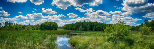 Pond. Beautiful pond panorama in summer day in Poland Royalty Free Stock Photography