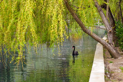 Pond in a beautiful park Stock Images