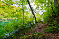 Pond in beech forest Stock Photography