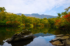 Pond in beech forest Stock Images
