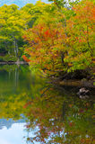 Pond in beech forest. Royalty Free Stock Photos