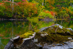 Pond in beech forest. Stock Photography