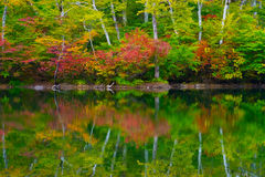 Pond in beech forest. Royalty Free Stock Images