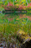 Pond in beech forest. Stock Photo