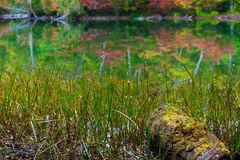 Pond in beech forest. Royalty Free Stock Photography