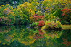 Pond in beech forest. Stock Images