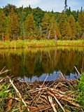Pond behind a Beaver dam Royalty Free Stock Photos