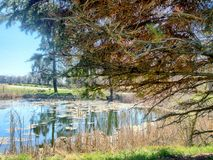 Pond with big tree in a park. A pond in a park Stock Photography