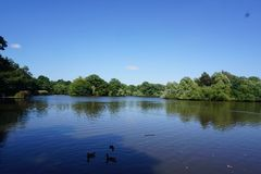 The pond. The blue lagoon on a summery day Royalty Free Stock Images