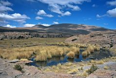 Pond in Bolivia,Bolivia. Pampas Grass in a pond at Eduardo Avaroa National Reserve,Bolivia Stock Image