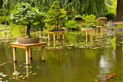 Pond with bonsai Stock Photos