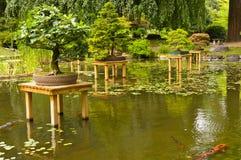 Pond with bonsai Stock Photos