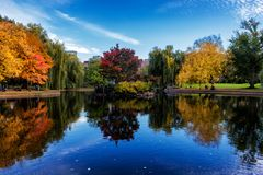 Pond in Boston Common Garden surrounded by colorful trees in fall season royalty free stock photography