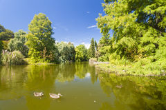 Pond in a botanic garden Stock Image
