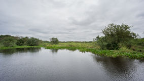 Pond in Brazilian pantanal, a marshy zone with crocodile trails stock footage