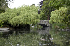 Pond bridge tree park Royalty Free Stock Photo
