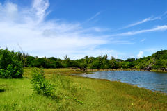 Pond. Bright summer day pond view Stock Photo