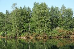 Pond in Brittany country. Pond and forest in morbihan country Royalty Free Stock Images