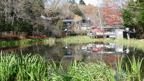 Pond called Kumobaike in Karuizawa, Nagano, Japan. For adv or others purpose use stock footage