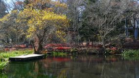 Pond called Kumobaike in Karuizawa, Nagano, Japan. For adv or others purpose use stock video