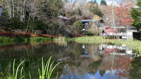 Pond called Kumobaike in Karuizawa, Nagano, Japan. For adv or others purpose use stock video footage
