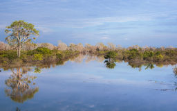 Pond in Cambodia. Small tropical lake in Siem Riep Royalty Free Stock Photos