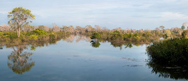 Pond in Cambodia. Small tropical lake in Siem Riep Stock Photos