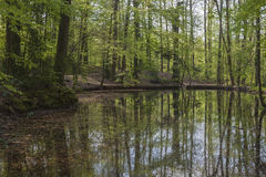 Pond at the casino park in spring, Lower Saxony, Germany Royalty Free Stock Image