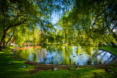 Pond at Centre Island, in Toronto, Ontario. Royalty Free Stock Photo