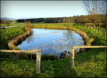 POND WITH CLOUDS. Small lake with clouds in water and green fields Royalty Free Stock Images