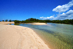 Pond coastline river  in the   relax and bush   madagascar Stock Photography
