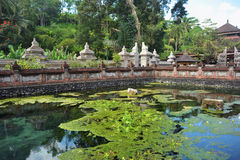 Pond coberto de vegetação com a grama em um lugar sagrado Fotos de Stock Royalty Free