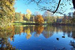 Pond with colorful autumn forest and clear sky Royalty Free Stock Photography