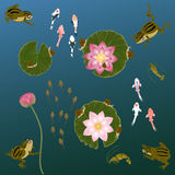 Pond com os lírios e a rã de água dos peixes da carpa da fritura de peixe Fotos de Stock Royalty Free
