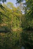 Pond com reflexão da água em Baixa Saxónia, alemão fotografia de stock