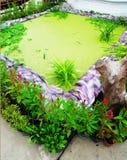 A pond Stock Photos