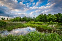 Pond at Corktown Common, in Toronto, Ontario. Stock Photography