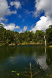 Pond in the Country. Small country pond surrounded by trees with a brilliant blue sky and white clouds Royalty Free Stock Photography