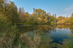 Pond in the country Royalty Free Stock Photo