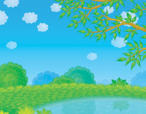 Pond in countryside. Color illustration of a small pond in countryside on fine summer day Stock Image