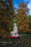 Pond with cypresses. Lake with bald cypresses Taxodium distichum and Buddha statue in Aun in the Fuveszkert, Szeged royalty free stock images