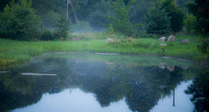 Pond at dawn Royalty Free Stock Photos