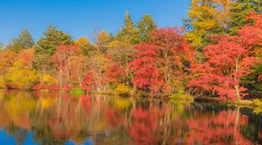 Pond in a delightful autumn. Stock Images