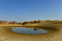 The pond in the desert Royalty Free Stock Photos