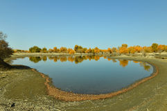 The pond in the desert Royalty Free Stock Images
