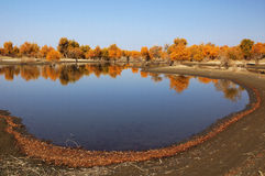The pond in the desert Stock Images