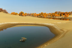 The pond in the desert Stock Image