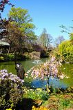 Pond in The Dingle, Shrewsbury. Stock Image