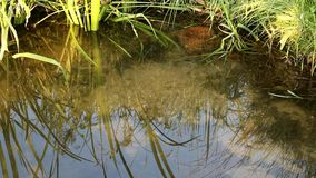 Pond with dragonflies morning stock footage